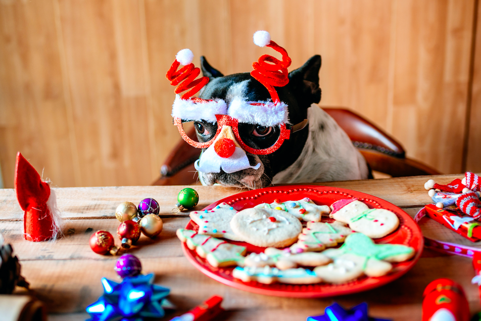 holiday-danger-for-pets