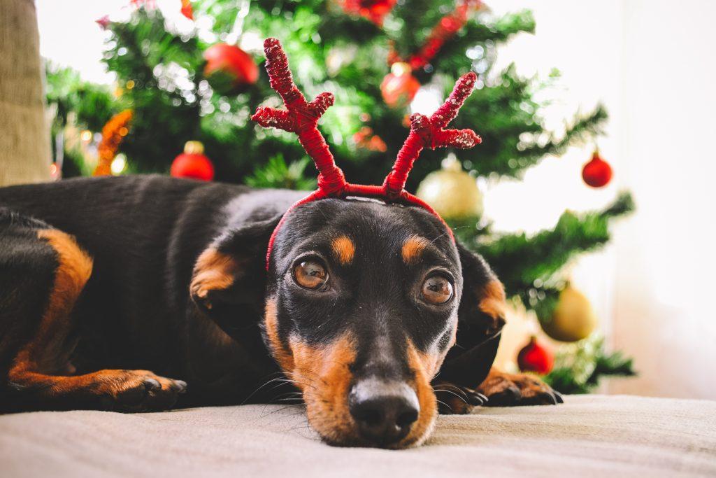 holiday-fundrasier