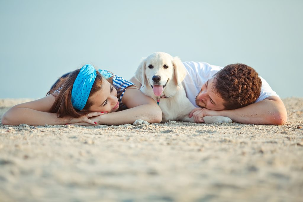 dog and owners at the beach
