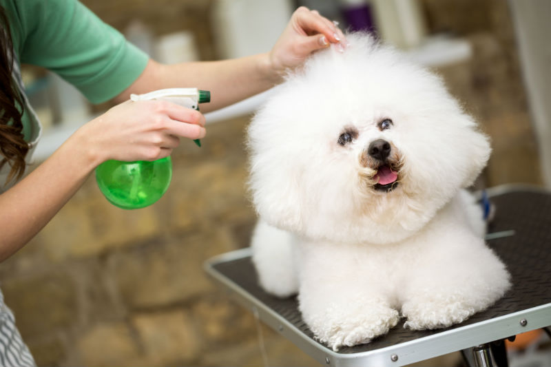 Why Grooming Your Pets in Winter is Necessary
