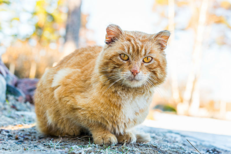 Everything You Need to Know About Senior Cats