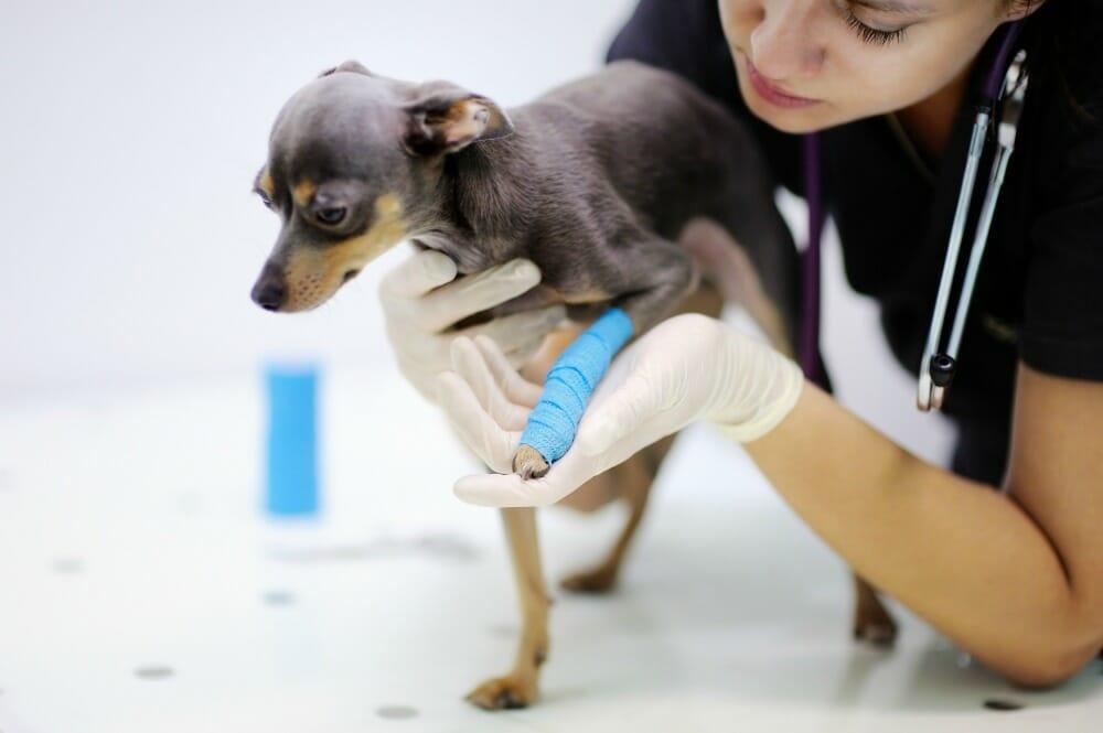 Pet Emergencies – When Do I Call the Vet? | Centennial