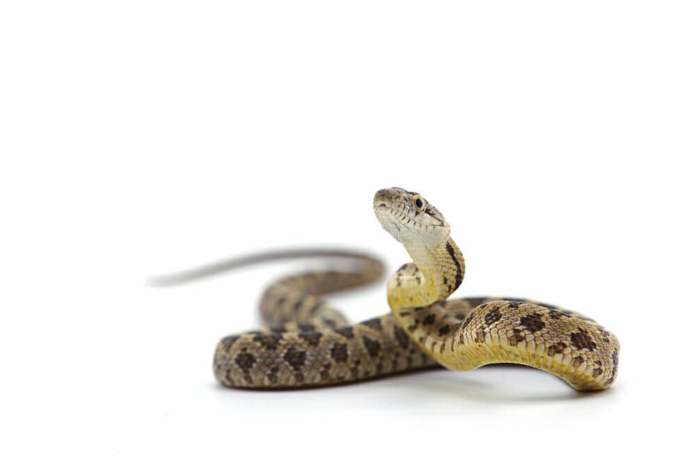 Resultado de imagem para snake